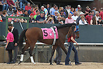 April 10, 2015: #5 Gold Medal Dancer before the running of the Apple Blossom Handicap at Oaklawn Park in Hot Springs, AR. Justin Manning/ESW/CSM