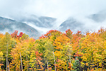 Fall foliage in the White Mountain National Forest, New Hampshire, USA