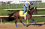 April 23, 2014  Derby Dreamers Racing Stable's Big Bazinga galloped under Loren Diego at Churchill Downs. Big Bazinga is trained by Katerina Vassilieva.