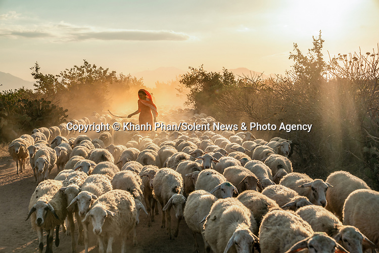 Pictured: Workers herding sheep across dusty roads.<br /> <br /> Women wearing colourful dresses herd sheep across dusty country roads.   Faint rays of sunlight struggle to burst through the dust clouds created by the herds of cattle as the villagers shepherd their flock.<br /> <br /> The enormous An Hoa sheep field is in Vietnam's Ninh Thuan province and is one of the largest places in the region for sheep to graze freely.   There are several different sized herds on the field, from a few hundred to a thousand, and it is a popular tourist dest.  SEE OUR COPY FOR DETAILS<br /> <br /> Please byline: Khanh Phan/Solent News<br /> <br /> © Khanh Phan/Solent News & Photo Agency<br /> UK +44 (0) 2380 458800