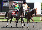 21 August 2010: PADDY O'PRADO and Jockey Kent Desormeaux in the post parade before the 34th running of the G1 Secretariat Stakes at Arlington Park in Arlington Heights, Illinois.