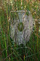 Back-lit spider's web