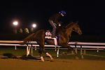 Midnight Sands, trained by trainer Brendan P. Walsh, exercises in preparation for the Breeders' Cup Dirt Mile at Keeneland Racetrack in Lexington, Kentucky on October 31, 2020.