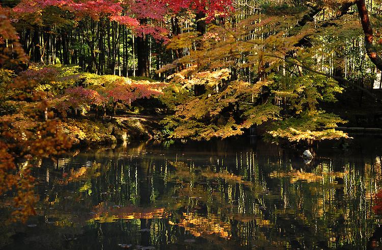 Autumn leaves, momiji, and a pond in a Japanese garden in Nanzenji, Kyoto.<br /> <br /> Feuilles d'automne, momiji et un étang dans un jardin japonais à Nanzenji, Kyoto.