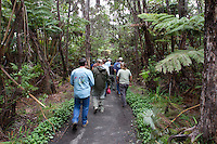 A group heads toward the Thurston Lava Tub at Hawai'i Volcanoes National Park, Big Island.