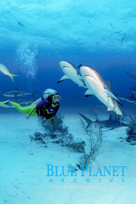 female diver and Caribbean reef sharks, Carcharhinus perezii, Nassau, Bahamas, Caribbean Sea, Atlantic Ocean