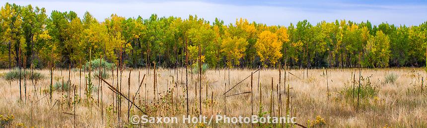 Autumn landscape panorama West Bijou Ranch short grass prairie, Strasburg Colorado; managed by Savory Institute,