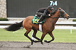 April 03, 2014: Hip 120 Smart Strike - Jade Queen consigned by Wavertree Stables worked 1/8 in 10:0.  Candice Chavez/ESW/CSM