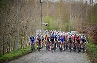 peloton over the cobbles towards the Stationsbergstraat<br /> <br /> 74th Dwars door Vlaanderen 2019 (1.UWT)<br /> One day race from Roeselare to Waregem (BEL/183km)<br /> <br /> ©kramon