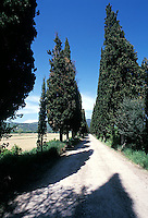 Tree lined road in Tuscany, Italy<br />