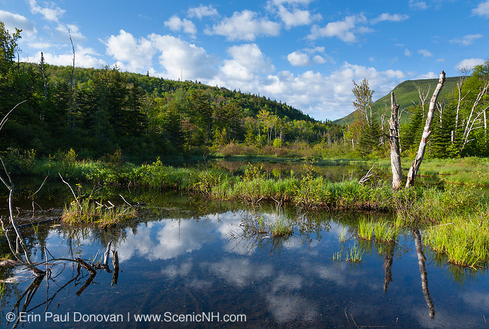 Zealand Pond in the White Mountains, New Hampshire during the summer months. This pond is located on the side of the Zealand Trail and is possibly the location of an old logging camp and railroad yard from the Zealand Valley Railroad, which was a logging railroad in operation from 1886-1897(+/-). Parts of the Zealand Trail follows the old railroad bed.