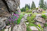 A high lookout viewpoint tops aStone path through alpine botanical garden.  Ohme Gardens, Wenatchee, Chelan County, Washington, USA.
