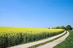 Europa, DEU, Deutschland, Nordrhein Westfalen, NRW, Rheinland, Niederrhein, Waldfeucht, Agrarlandschaft, Fruehling, Raps, Bluete, Gelbe Rapsblueten, Weg, Feldweg, Kategorien und Themen, Landwirtschaft, Landwirtschaftlich, Agrar, Agrarwirtschaft, Erzeugung, Landwirtschaftliche Produkte, Natur, Naturfoto, Naturfotos, Naturfotografie, Naturphoto, Naturphotographie, Landschaft, Landschaften, Landschaftsfoto, Landschaftsfotografie, Landschaftsphoto, Landschaftsphotographie....[Fuer die Nutzung gelten die jeweils gueltigen Allgemeinen Liefer-und Geschaeftsbedingungen. Nutzung nur gegen Verwendungsmeldung und Nachweis. Download der AGB unter http://www.image-box.com oder werden auf Anfrage zugesendet. Freigabe ist vorher erforderlich. Jede Nutzung des Fotos ist honorarpflichtig gemaess derzeit gueltiger MFM Liste - Kontakt, Uwe Schmid-Fotografie, Duisburg, Tel. (+49).2065.677997, ..archiv@image-box.com, www.image-box.com]