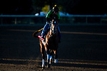 November 3, 2020: Bon Raison, trained by trainer Jack Sisterson, exercises in preparation for the Breeders' Cup Sprint at Keeneland Racetrack in Lexington, Kentucky on November 3, 2020. Jon Durr/Eclipse Sportswire/Breeders Cup