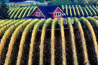 Sokol Blosser Vineyards in fall color and house top. Oregon