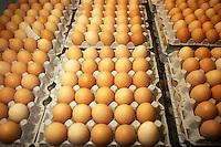 Produzione di uova. Production of eggs. Allevamento. Breeding....