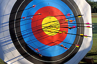 arrows shot at archery target