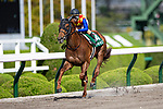 TAKARAZUKA,JAPAN-APR 18: T O Keynes ,ridden by Fuma Matsuwaka,wins the Antares Stakes at Hanshin Racecourse on April 18,2021 in Takarazuka,Hyogo,Japan. Kaz Ishida/Eclipse Sportswire/CSM