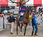 August 18, 2021: #3 Baltimore Bucko (GB) ridden by Richard Condon in the post parade before the start of the Grade 1 Jonathan Sheppard Handicap at Saratoga Race Course in Saratoga Springs, N.Y. on August 18, 2021. <br /> Robert Simmons/Eclipse Sportswire/CSM