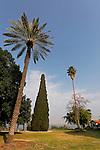 T-051 Cypress in Degania