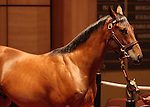 13 July 2010.  Hip #98 Discreet Cat - Princess Birdeye colt sold for $235,000.   Discreet Cat's first foals are yearlings of 2010.