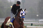 Preakness contender Sway Away gallops Thursday morning, May 19, 2011, at Pimlico Race Course in Baltimore, MD. (Joan Fairman Kanes/EclipseSportswire)