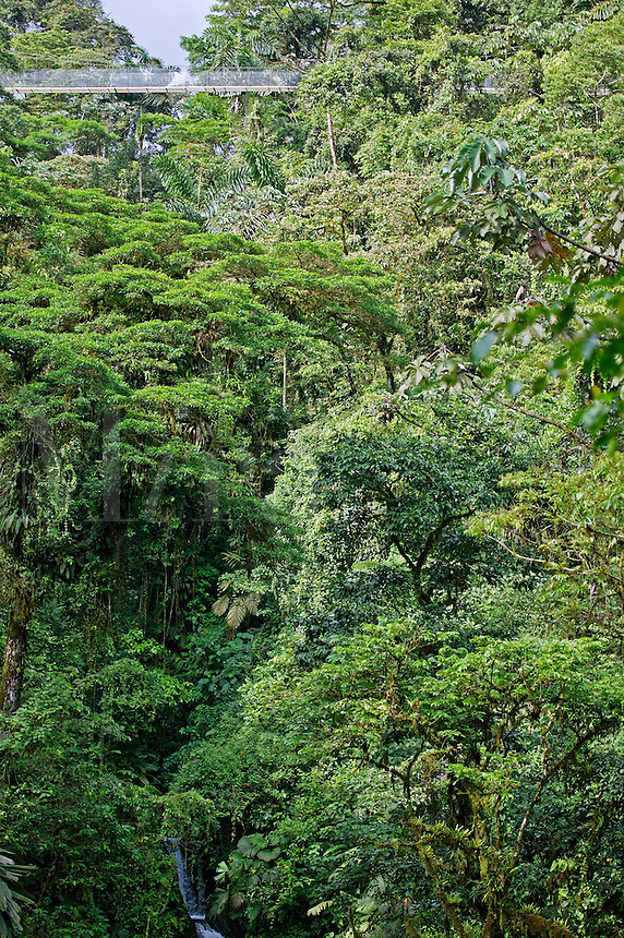 Arenal Hanging Bridges Trail, Arenal, Costa Rica