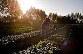 Punta Gorda, Florida<br /> December 28, 2014<br /> <br /> <br /> Eva Worden and her husband, Chris own and operate Worden Farm, a successful 45 acre organic farm in Punta Gorda, Florida.
