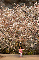 People enjoy the start of Spring in the Charlotte, North Carolina while visiting Charlotte's Freedom Park. Photo taken as part of a series of spring scenes in North Carolina by Charlotte photographer Patrick Schneider. Editorial use only (no model releases)