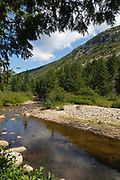Whitewall Brook in Zealand Notch of the New Hampshire White Mountains during the summer months. This area was part the Zealand Valley Railroad, which was a logging railroad in operation from 1884-1897.