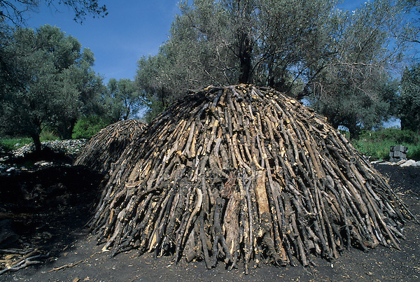 Olive Trees, Samos, Greek Islands, Eastern Aegean Islands, Greece, Europe