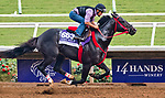 DEL MAR, CA - OCTOBER 28: Sharp Azteca, owned by Gelfenstein Farm and trained by Jorge Navarro, exercises in preparation for the Breeders' Cup Las Vegas Dirt Mile at Del Mar Thoroughbred Club on October 28, 2017 in Del Mar, California. (Photo by Alex Evers/Eclipse Sportswire/Breeders Cup)