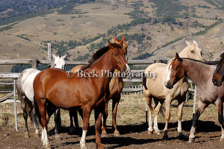Horses, Rio Malleo