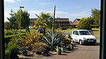 Pictured:  The agave plant in Julie Crook's front garden of her home in Andover, Hampshire on the 15th June 2020 as the stem continues to grow.<br /> <br /> An exotic 'tequila plant' has suddenly rocketed to 25ft in height after mysteriously sprouting in a couple's front garden after two decades lying dormant.  The giant agave's stalk unexpectedly began shooting up 12 weeks ago and now towers over owners Rob and Julie Crook's two-storey home in a little cul-de-sac.<br /> <br /> The grandparents-of-two have been left stunned by the plant's 'Jack and the Beanstalk' type growth after planting it in 2005.  Mrs Crook was gifted a six-inch pup - an offspring of the parent plant - by a friend 20 years ago after her fascination with the asparagus-like shrub.<br /> <br /> But the 59-year-old said she never expected the agave to grow to such heights at the front of the couple's home in the small Hampshire village of Charlton.  SEE OUR COPY FOR DETAILS.<br /> <br /> © Solent News & Photo Agency<br /> UK +44 (0) 2380 458800