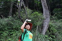 A tourist walks through some of the temperate forest that make up most of the vegetation cover in the Jiuzhaigou National Park. These forests are home to the endangered giant panda, the red panda and also the golden snub-nosed monkey.