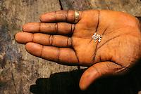 Tortiya, Ivory Coast. Broker Holding   Diamonds in his Hand.