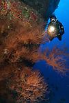 Diver on the back wall molokini overBlack coral bush.