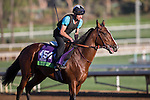 OCT 29 2014:Karakontie, trained by Jonathan Pease, exercises in preparation for the Breeders' Cup Mile at Santa Anita Race Course in Arcadia, California on October 29, 2014. Kazushi Ishida/ESW/CSM
