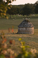 Europe/France/Midi-Pyrénées/46/Lot/env de Gramat: Caselle et moutons en pature