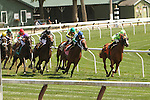 August 17, 2014:  Tammy The Torpedo (More Than Ready x Sarch and Seizure), outside with prurple cap, with Joel Rosario aboard a Maiden 83,000 for 2-year old fillies on the turf, going 1 1/16 mile  at Saratoga Racetrack. Trainer: Chad Brown. Owner: Long Lake Stables. Sue Kawczynski/ESW/CSM