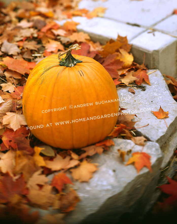 A skewed focus, 4x5 format image of a nearly round, bright orange pumpkin sitting on the edge of a stone step, backed in one half of the frame by beautiful red and orange fall leaves from a maple tree that are covering the ground and making this a quintessential autumn photo with plenty of room for text.