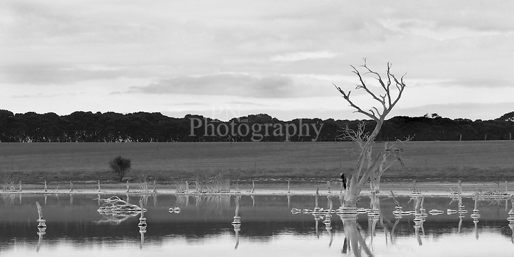 Reflected beauty from Kents Lagoon Kangaroo Island South Australia on a very still afternoon Photographed the lagoon on a very overcast day to get the contracts