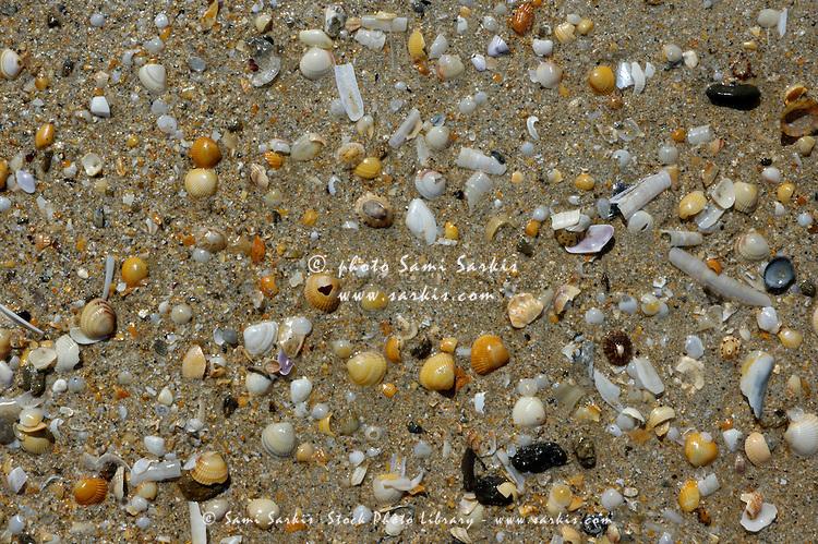 Seashells on the beach at Saint-Cast-le-Guildo, Brittany, France.