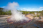 Echinus Geyser steams away as dawn begins to light Norris Geyser Basin.  Yellowstone National Park, the first National Park in the world, still enthrals over three million visitors a year with it's geothermal features,wildlife,  rugged mountains, deep canyons and stunning ecosystem.