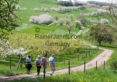 Deutschland, Baden-Wuerttemberg, Markgraefler Land, Muellheim, Ortsteil Feldberg: Wanderung durch  bluehende Streuobstwiesen und Obstplantagen | Germany, Baden-Wuerttemberg, Markgraefler Land, town Muellheim, district Feldberg: hiking through meadows with fruit trees
