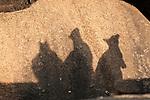 Shadow of Mareeba rock-wallabies (Petrogale mareeba)