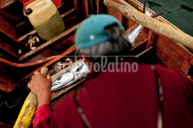 """Photo Essay on the life of the people Lafkenche, a part of the Mapuche indian nation from Southern Chile. Lafkenche mean """"peple from the sea"""", they live from Bio-Bio river towards the southern coast of the country, making a living as fishermen. Their traditions are strong and new groups of them are organizing to preserve their identityBonifacio cove, XIV Region of the Rivers. December 29, 2012. <br /> A sawfish, was the only capture, on board of Tonina, the name of boat fiber of Miguel Barrientos, Pres union Caleta fishermen Bonifacio."""
