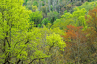 Spring forest colors, Great Smoky Mountains National Park