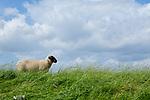 Europa, DEU, Deutschland, Niedersachsen, Wesermarsch, Jade, Am Jadebusen, Schaf auf dem Deich, Wolken, Natur, Umwelt, Landschaft, Jahreszeiten, Stimmungen, Landschaftsfotografie, Landschaften, Landschaftsphoto, Landschaftsphotographie, Wetter, Wetterelemente, Wetterlage, Wetterkunde, Witterung, Witterungsbedingungen, Wettererscheinungen, Meteorologie, Wettervorhersage, <br /> <br /> [Fuer die Nutzung gelten die jeweils gueltigen Allgemeinen Liefer-und Geschaeftsbedingungen. Nutzung nur gegen Verwendungsmeldung und Nachweis. Download der AGB unter http://www.image-box.com oder werden auf Anfrage zugesendet. Freigabe ist vorher erforderlich. Jede Nutzung des Fotos ist honorarpflichtig gemaess derzeit gueltiger MFM Liste - Kontakt, Uwe Schmid-Fotografie, Duisburg, Tel. (+49).2065.677997, ..archiv@image-box.com, www.image-box.com]