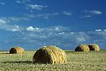 Farm land with baled wheat in field sunrise Eastern Washington State USA.